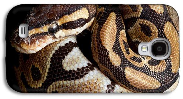 Ball Python Python Regius Galaxy S4 Case by David Kenny
