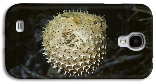 Balloonfish Galaxy S4 Case