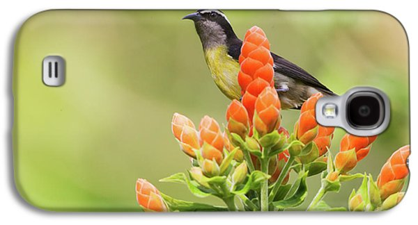 Bananaquit On Blooms Galaxy S4 Case