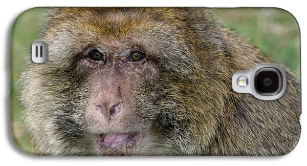 Barbary Macaque Galaxy S4 Case by Nigel Downer