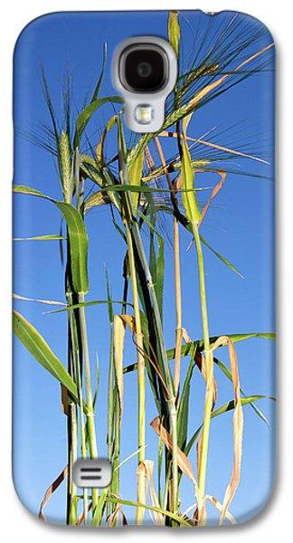 Barley (hordeum Vulgare Galaxy S4 Case