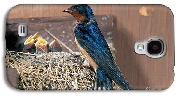 Barn Swallow At Nest Galaxy S4 Case by Anthony Mercieca