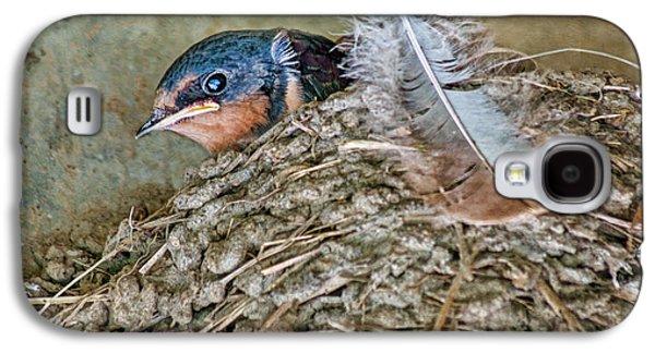 Barn Swallow Fledgling - Baby Bird In Nest Galaxy S4 Case