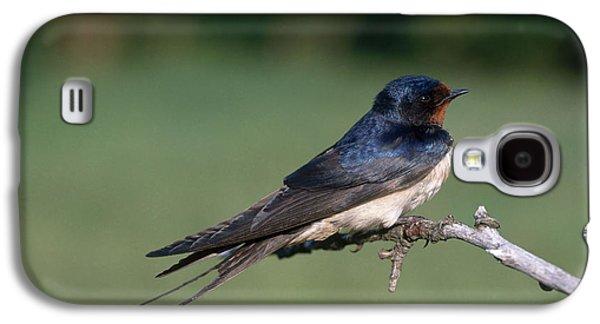 Barn Swallow Galaxy S4 Case by Hans Reinhard