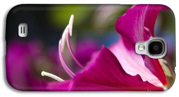 Bauhinia Purpurea - Hawaiian Orchid Tree Galaxy S4 Case by Sharon Mau
