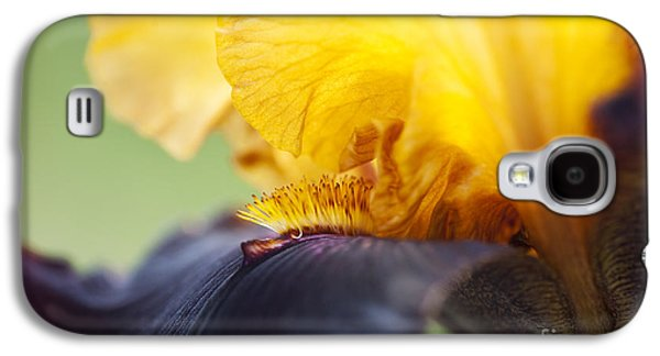 Bearded Iris Dwight Enys Abstract Galaxy S4 Case by Tim Gainey