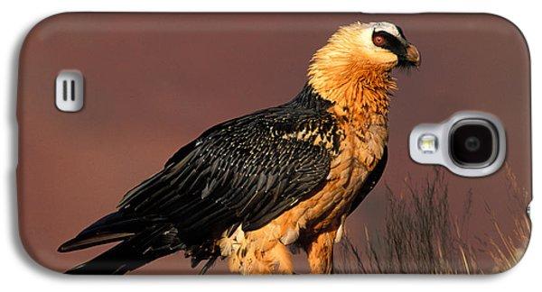 Bearded Vulture Or Lammergeier Galaxy S4 Case