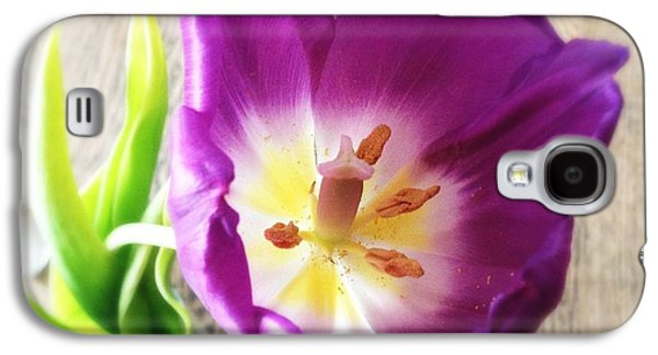 Beautiful Galaxy S4 Case - Beautiful Purple Flower From Above by Matthias Hauser