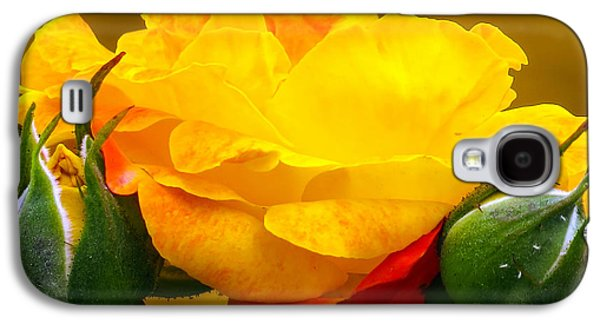 Beautiful Yellow Rose Galaxy S4 Case by Zina Stromberg
