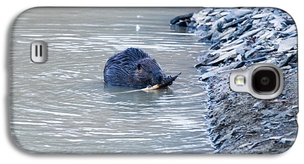 Beaver Chews On Stick Galaxy S4 Case