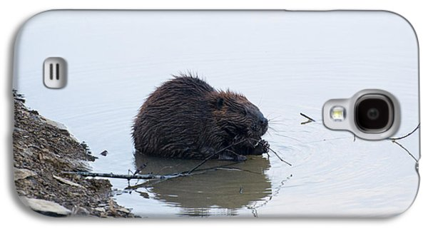 Beaver In The Shallows Galaxy S4 Case by Chris Flees