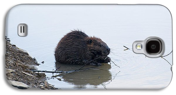 Beaver In The Shallows Galaxy S4 Case
