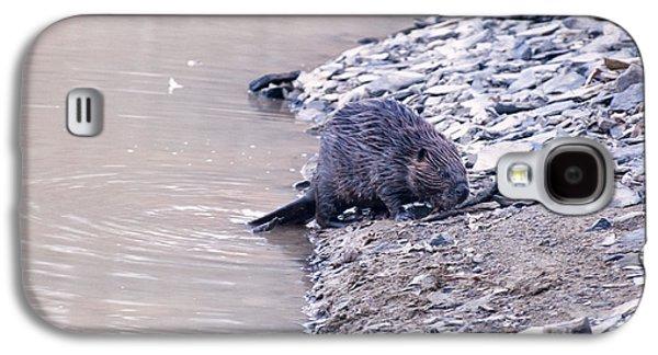 Beaver On Dry Land Galaxy S4 Case