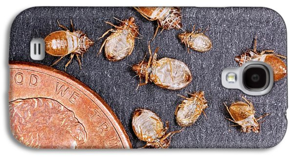 Bed Bugs With A Us One Cent Coin Galaxy S4 Case by Stephen Ausmus/us Department Of Agriculture