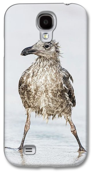 Bedraggled Juvenile Kelp Gull Galaxy S4 Case