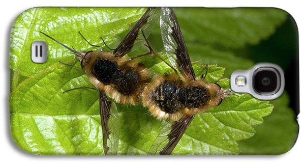Bee-flies Galaxy S4 Case by Nigel Downer
