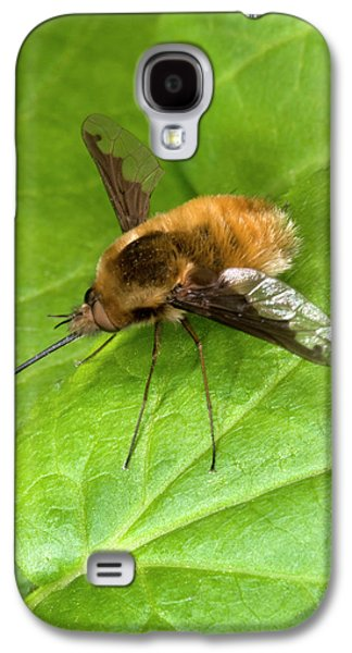Bee-fly Galaxy S4 Case