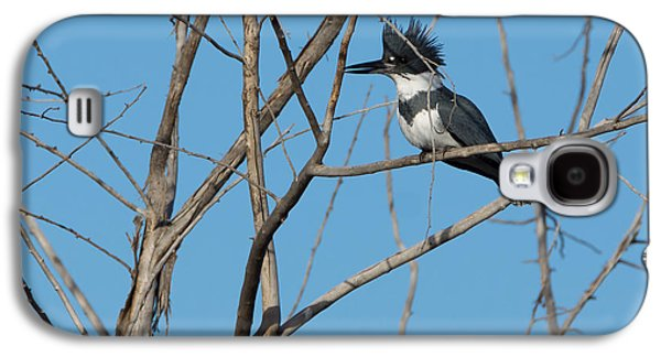 Belted Kingfisher 4 Galaxy S4 Case by Ernie Echols