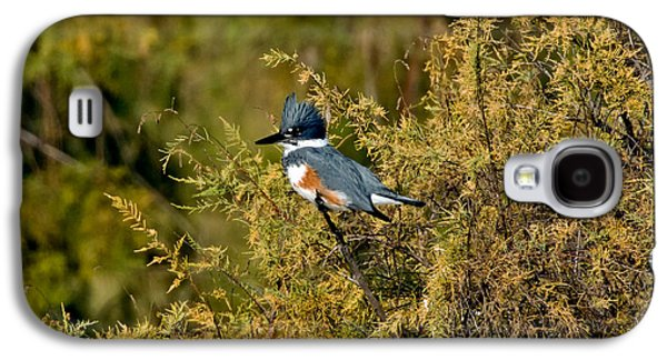 Belted Kingfisher Female Galaxy S4 Case by Anthony Mercieca