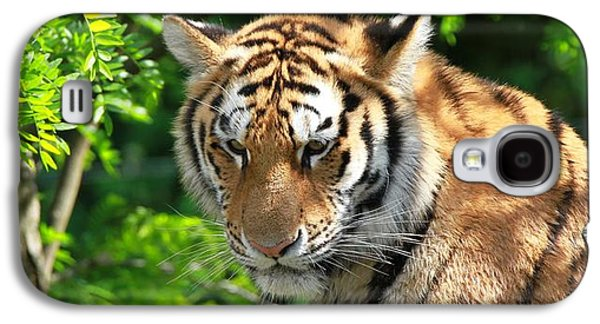 Bengal Tiger Portrait Galaxy S4 Case by Dan Sproul