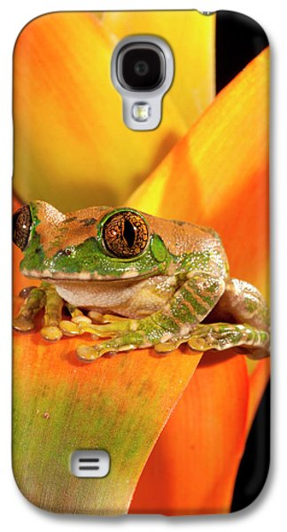 Big Eye Treefrog, Leptopelis Galaxy S4 Case