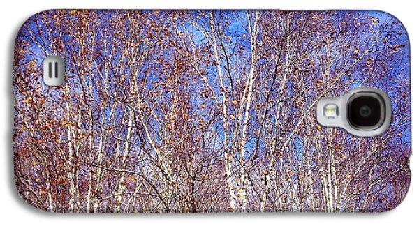 Orange Galaxy S4 Case - Birch Trees And Blue Sky In Autumn by Matthias Hauser