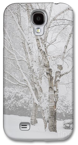 Birch Trees In Winter Galaxy S4 Case by Elena Elisseeva