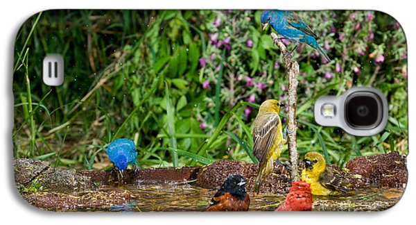 Birds Bathing Galaxy S4 Case