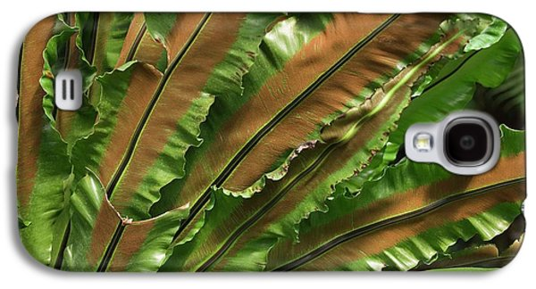 Bird's Nest Fern (asplenium Nidus) Galaxy S4 Case