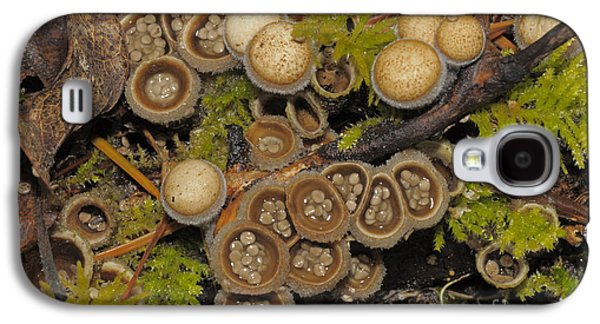Birds Nest Fungus Galaxy S4 Case by Robert and Jean Pollock