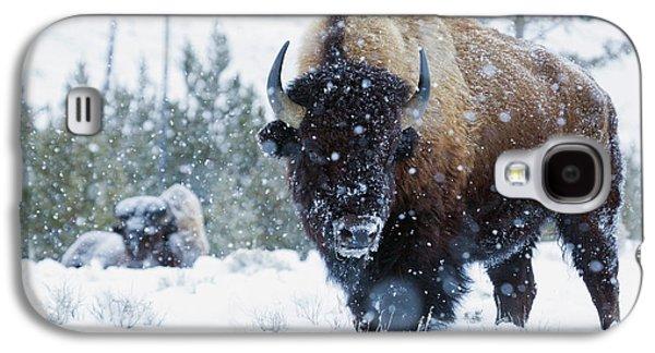 Bison Bulls, Winter Landscape Galaxy S4 Case by Ken Archer