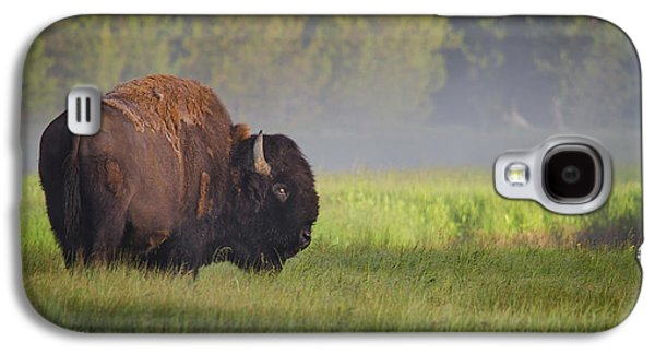 Bison In Morning Light Galaxy S4 Case
