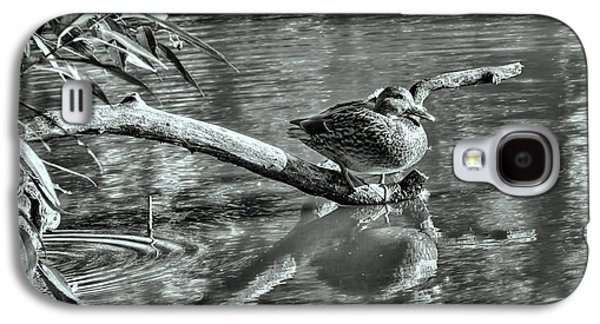 Black And White Presentation Of  Female Mallard Duck Sitting On A Log Near And Reflected In Water Galaxy S4 Case by Leif Sohlman