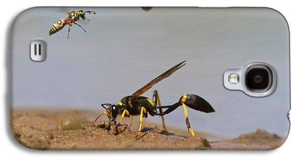 Black-and-yellow Mud Dauber (sceliphron Galaxy S4 Case
