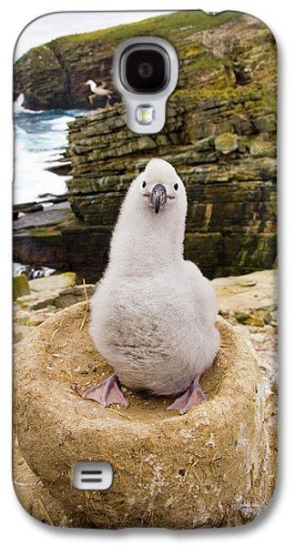 Black-browed Albatross Chick Falklands Galaxy S4 Case by