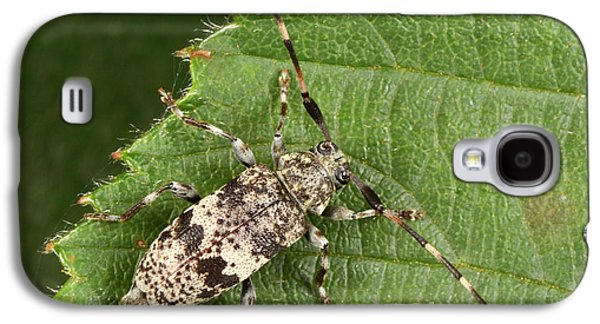 Black-clouded Longhorn Beetle Galaxy S4 Case