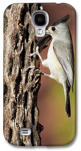 Titmouse Galaxy S4 Case - Black-crested Titmouse (baeolophus by Larry Ditto