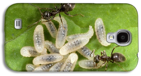 Black Garden Ants Carrying Larvae Galaxy S4 Case by Nigel Downer