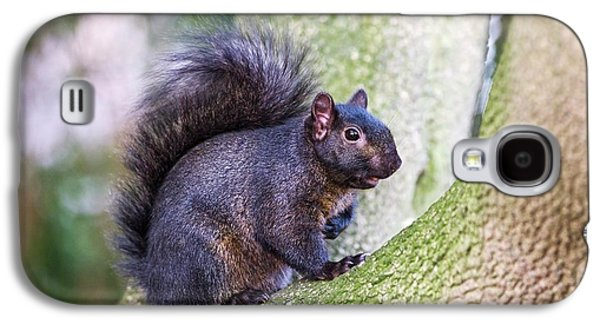 Black Squirrel In A Tree Galaxy S4 Case by John Devries