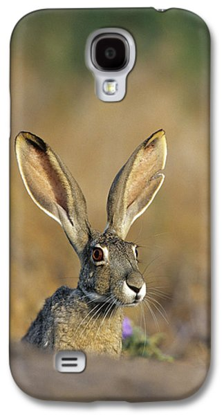 Black-tailed Jack Rabbit (lepus Galaxy S4 Case by Richard and Susan Day