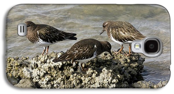 Black Turnstones Feeding Galaxy S4 Case by Bob Gibbons
