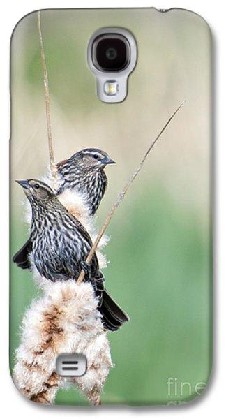 Blackbird Pair Galaxy S4 Case by Mike  Dawson