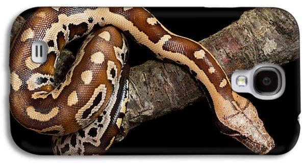 Blood Python Python Brongersmai Galaxy S4 Case by David Kenny