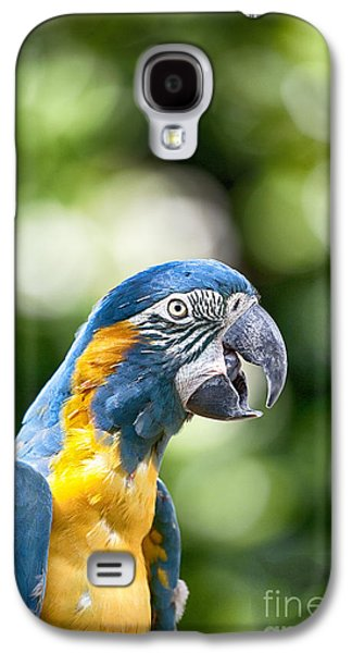 Blue And Gold Macaw V2 Galaxy S4 Case by Douglas Barnard