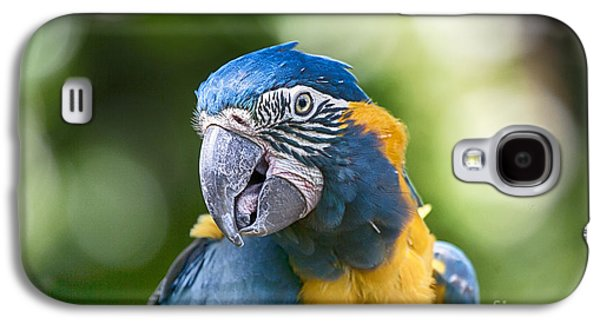 Blue And Gold Macaw V3 Galaxy S4 Case by Douglas Barnard