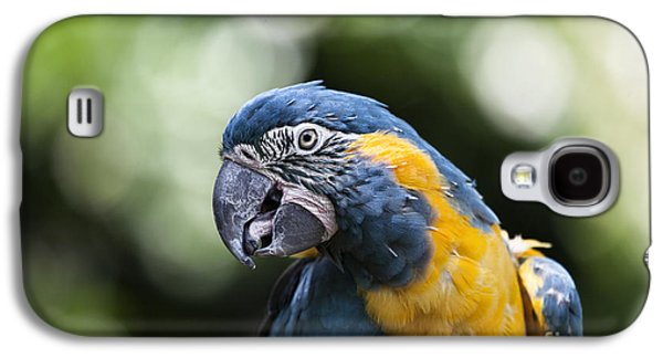 Blue And Gold Macaw V5 Galaxy S4 Case by Douglas Barnard