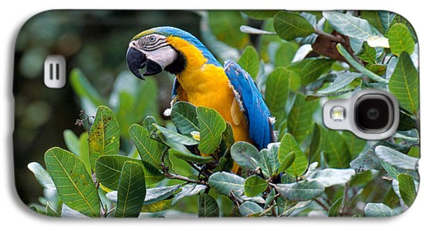 Blue And Yellow Macaw Galaxy S4 Case by Art Wolfe
