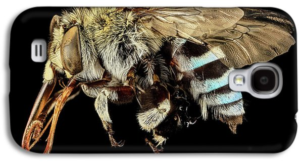 Blue Banded Bee Galaxy S4 Case