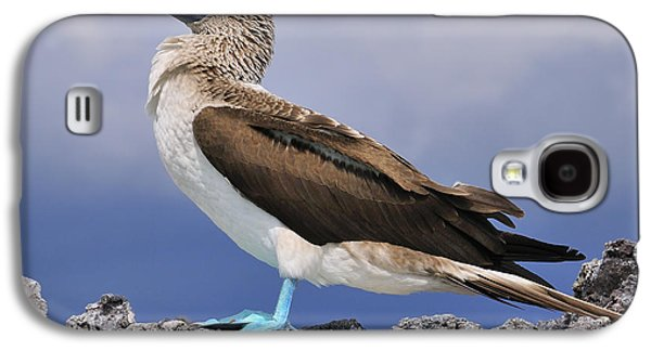 Blue-footed Booby Galaxy S4 Case by Tony Beck