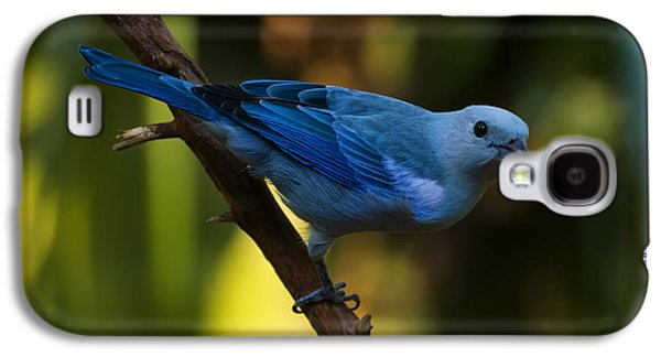 Blue Grey Tanager Galaxy S4 Case
